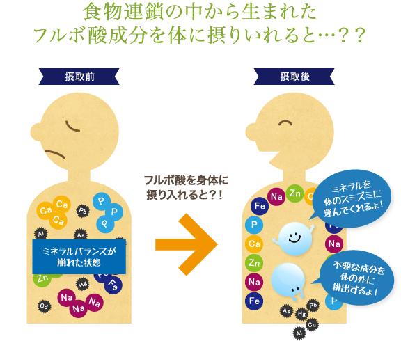食物連鎖の中から生まれたフルボ酸成分を体に摂りいれると…??